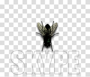 Fly dock icons, SKYPE, fly icon PNG clipart