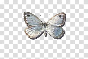 gray butterfly vector art PNG clipart