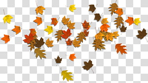 Scrap, assorted-color maple leaves PNG