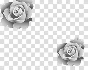 rose vector art PNG clipart