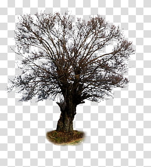 Tree 23 , brown bare tree illustration PNG clipart