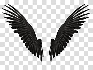Feathered Wings 2A , pair of black wings illustration PNG clipart