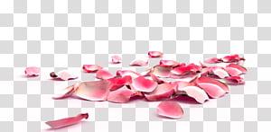 Rose Petals, pink petals illustration PNG